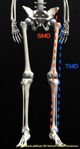 smd-tmd